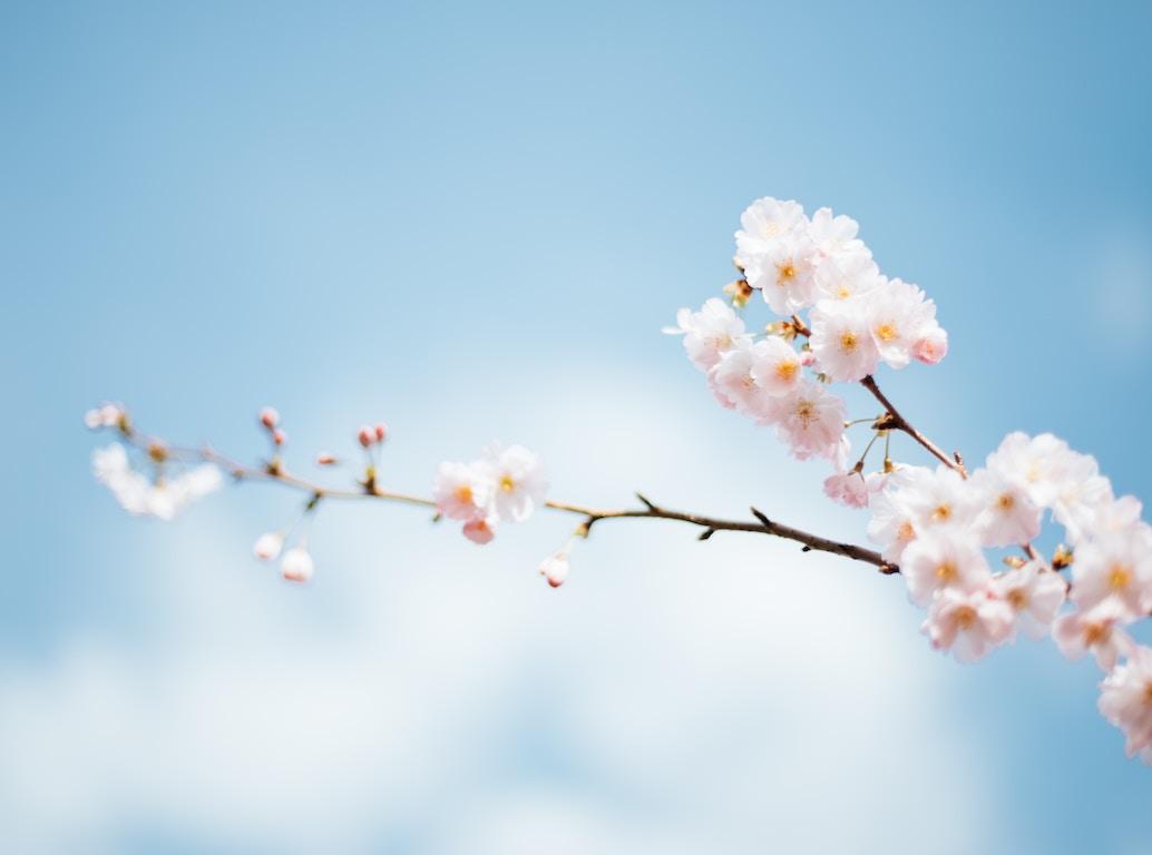 Flowers on Blue Sky-anthony-delanoix-222456-unsplash